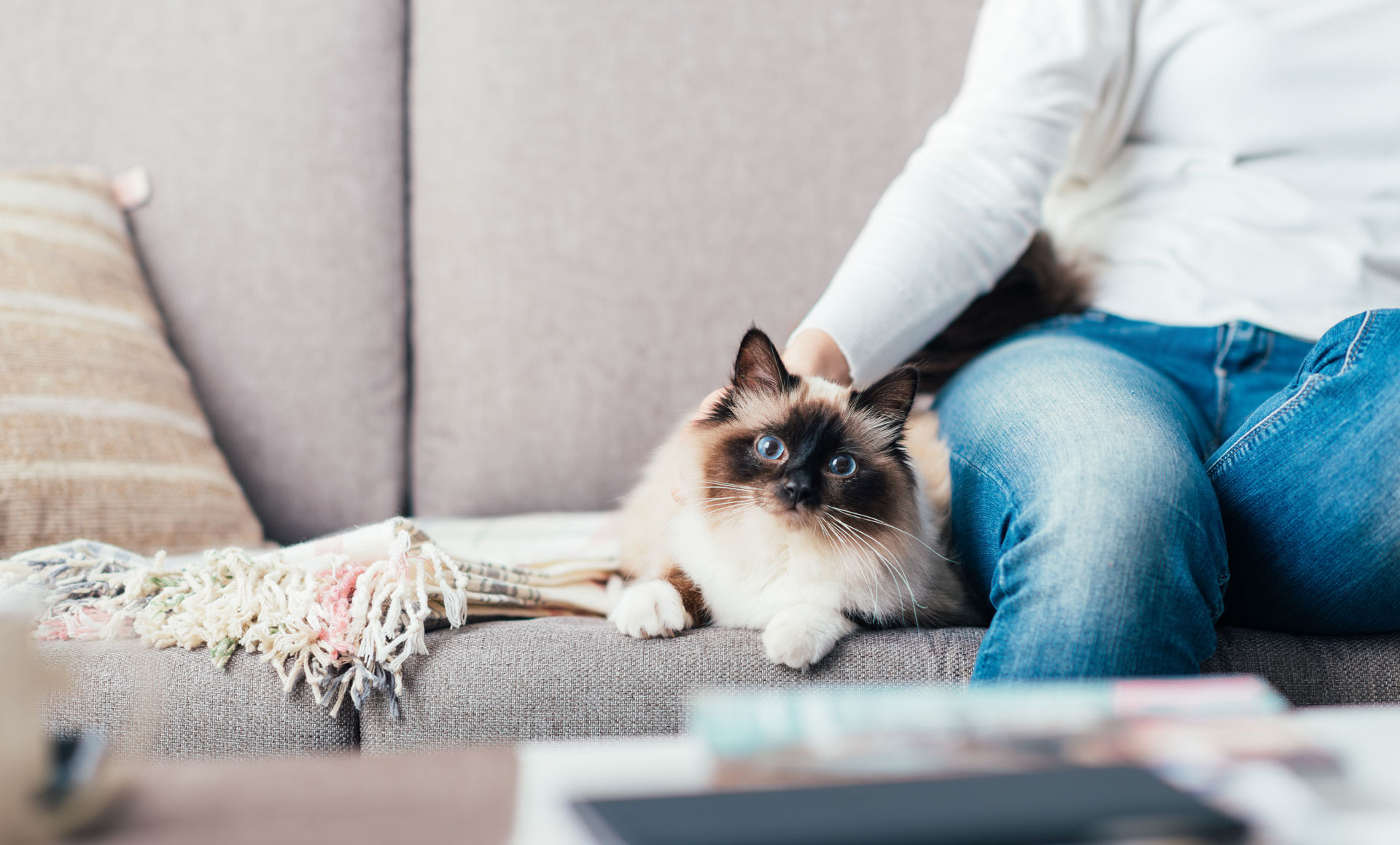Pet Sitting Liverpool