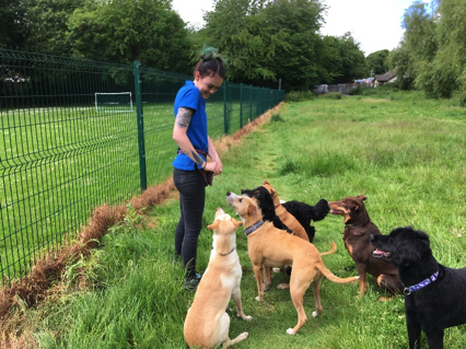 professional dog walker and pet sitter in Liverpool